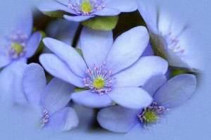 terapia-floral-lilas5_119404